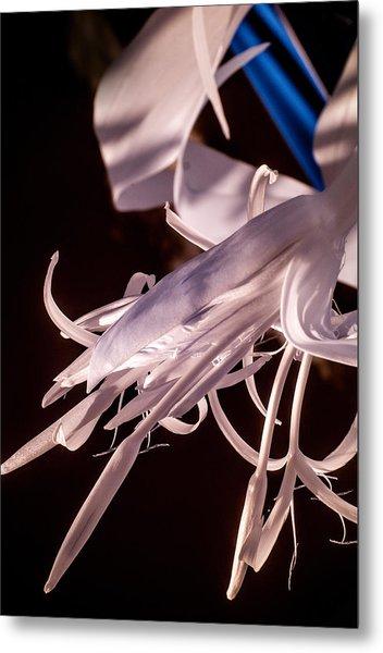 Florida Whites 2 Metal Print