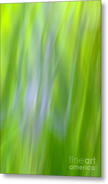 Flower Abstract Metal Print by Kelly Morvant