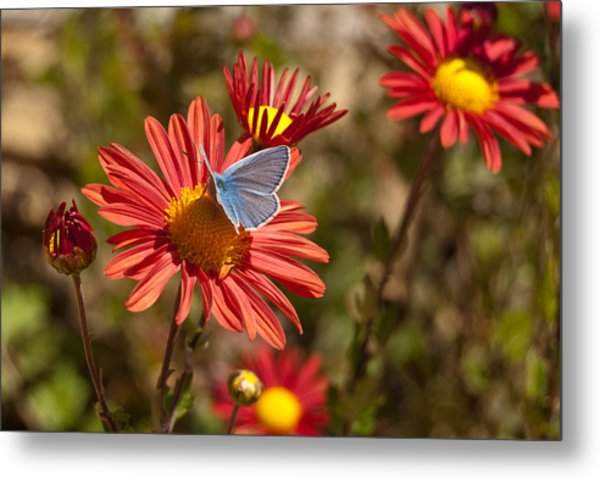Flower And Butterfly Metal Print by Mariana Atanasova