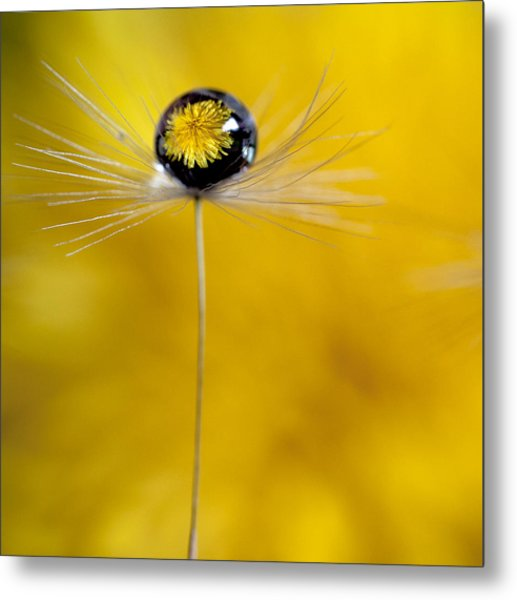 Flower And Seed Metal Print