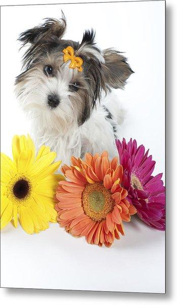 Flower Doggie Metal Print