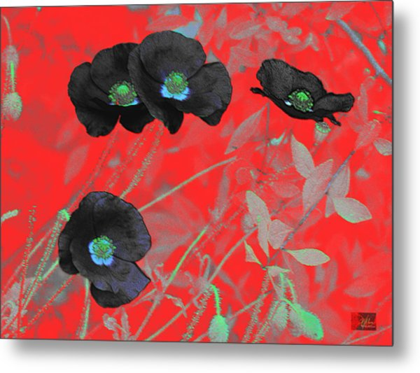 Flower Garden -  Four Black Poppies On Red Metal Print