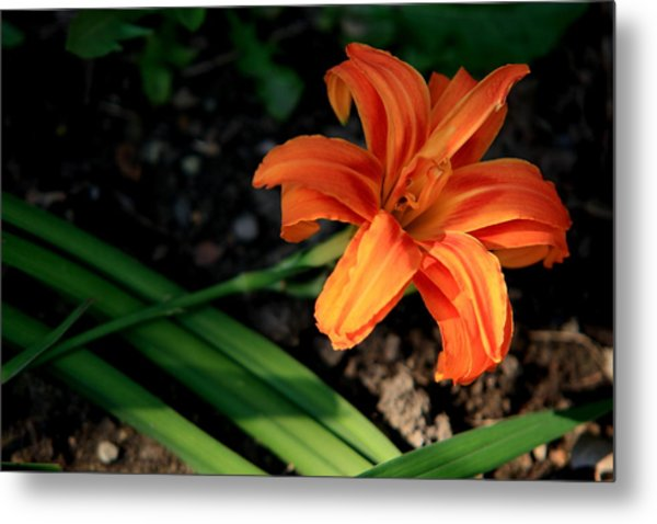 Flower In Backyard Metal Print