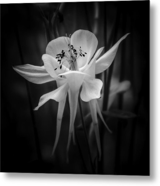 Flower In Black And White 1 Metal Print