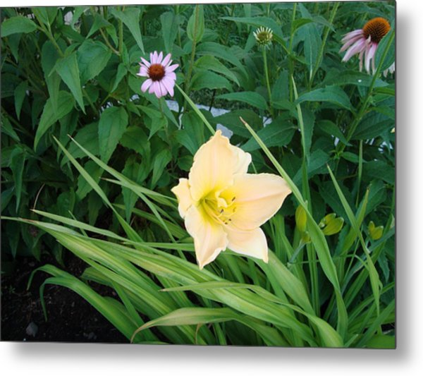 Flower In Idaho Falls Metal Print by Iam Wayne