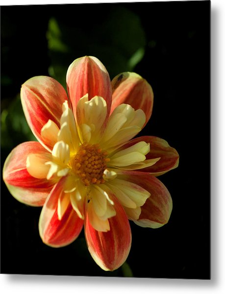Flower In The Sun Metal Print