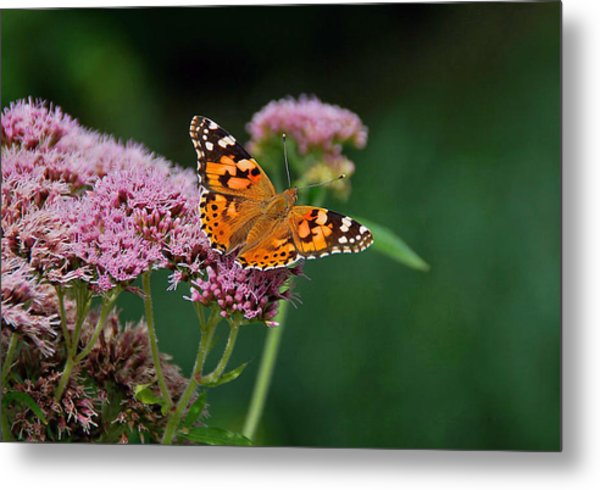 Flower Kissed By Butterfly Metal Print by Judith Russell-Tooth