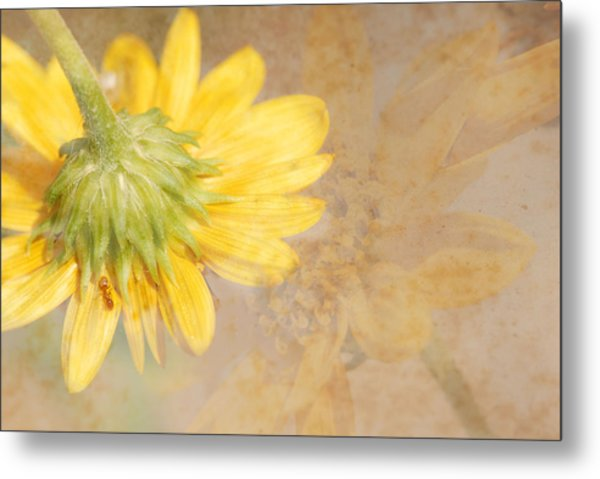 Flower Rhythm Metal Print