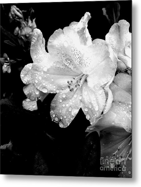 Flower With Water Drops Metal Print