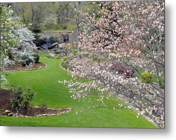 Flowering Dogwoods In Cleveland Park's Rock Quarry Falls  Metal Print