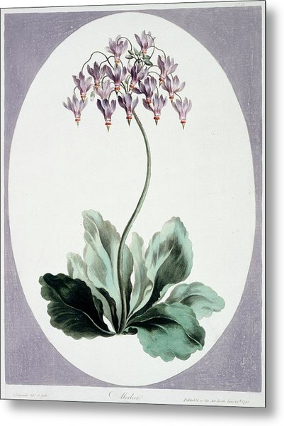 Flowering Plant Metal Print by Natural History Museum, London/science Photo Library