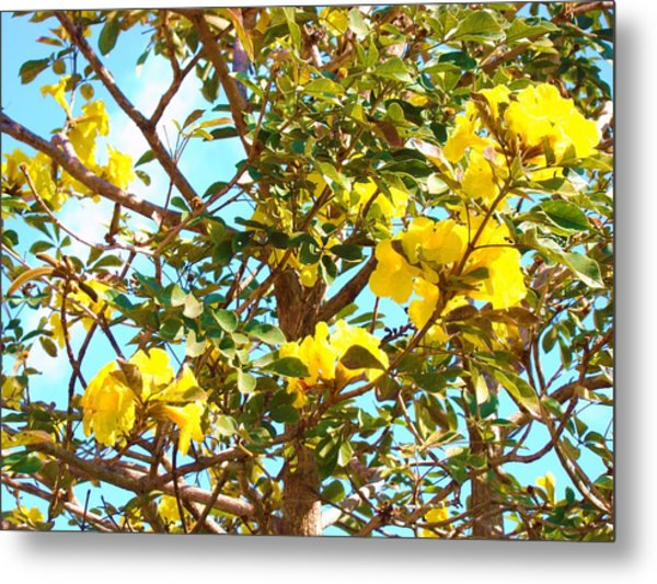 Flowering Tree Metal Print by Van Ness