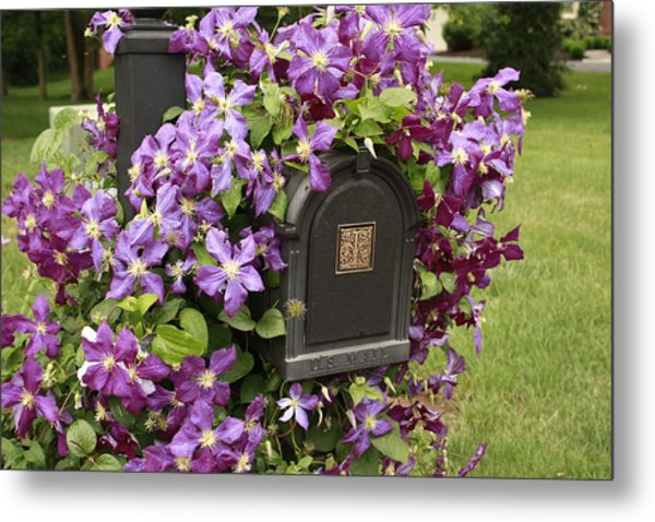Flowering Vine  Metal Print