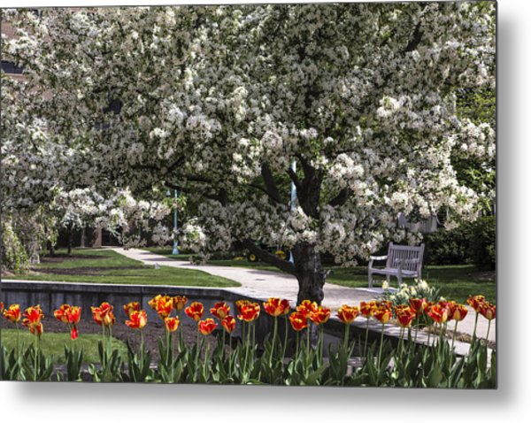 Flowers And Bench At Michigan State University  Metal Print