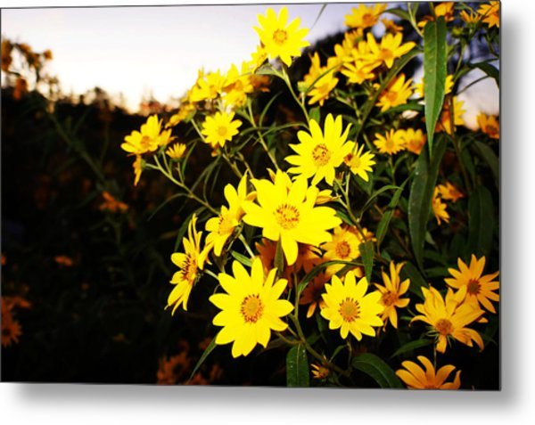 Metal Print featuring the photograph Flowers by Artistic Panda