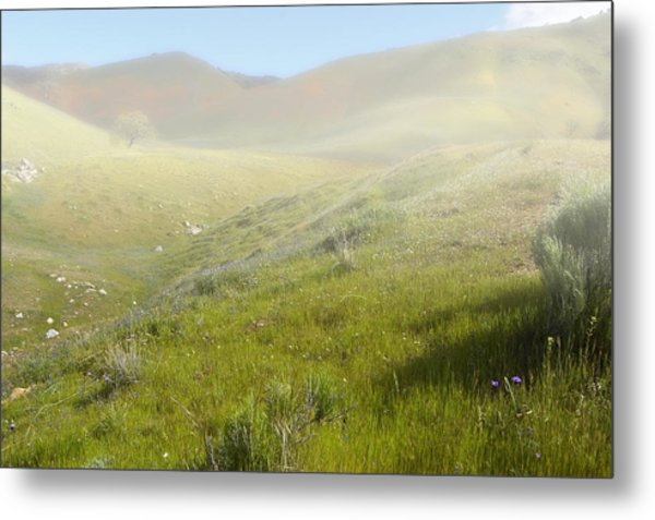 Flowers Coming Out Of The Fog Metal Print