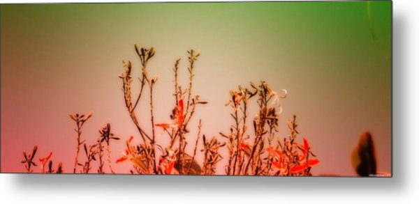 Flowers Dreaming Metal Print by Vidyalakshmi AC