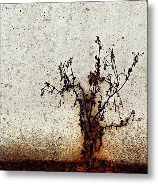 The Brown Plant Metal Print
