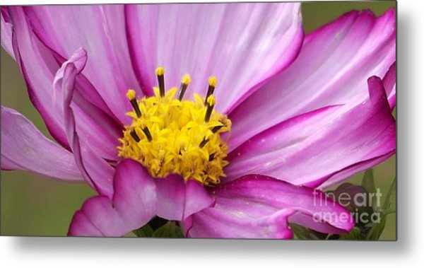 Flowers For The Wall Metal Print