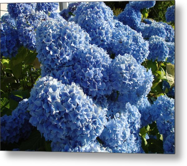 Flowers From Dalles Dam Visitor Center Metal Print by Iam Wayne