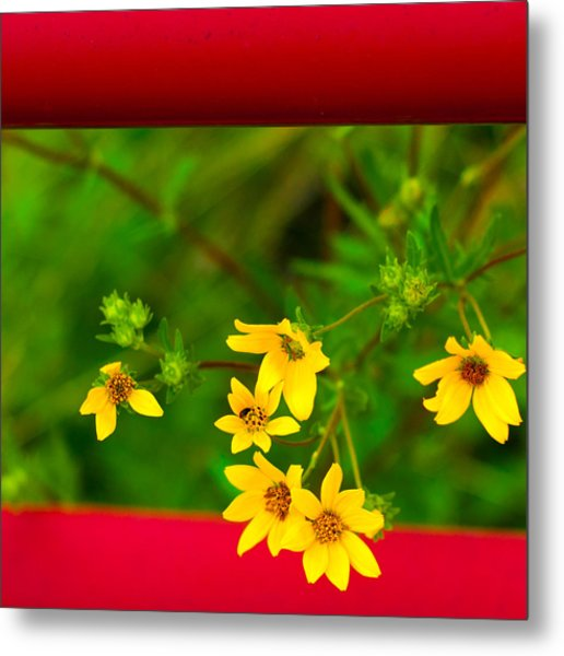 Flowers In Red Fence Metal Print
