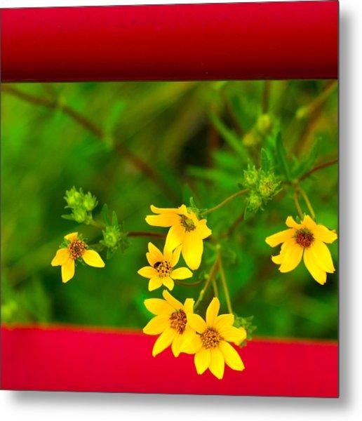 Flowers In Red Fence Metal Print