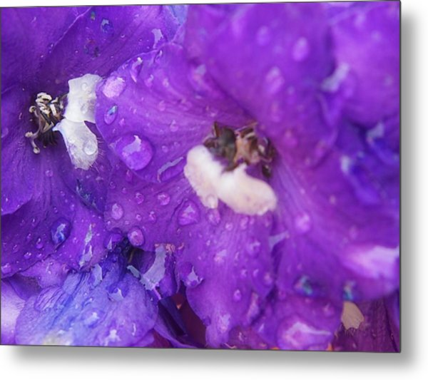Flowers In The Rain Metal Print by Chrissy Dame
