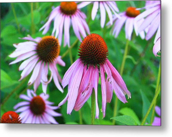 Flowers Metal Print by Lisa Alex