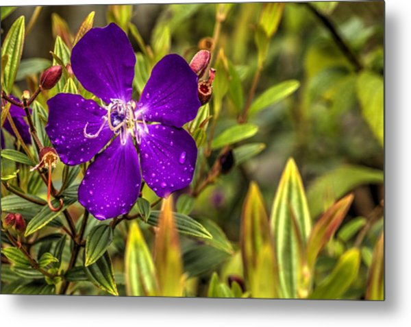 Flowers Love Water Metal Print