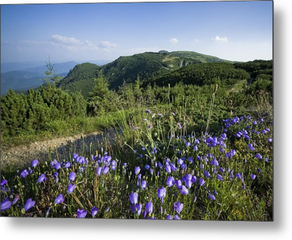 Flowers On Summer Mountain  Metal Print by Ioan Panaite