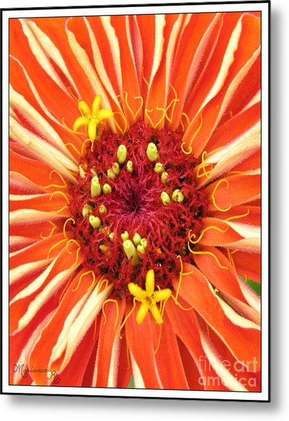 Flowers Within A Flower Metal Print