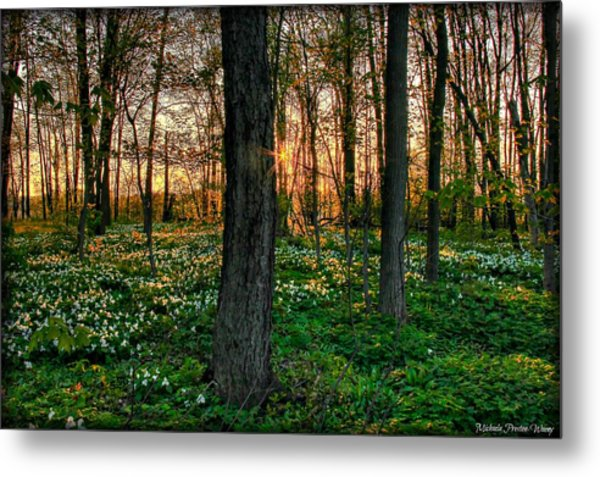 Flowery Sunset Metal Print