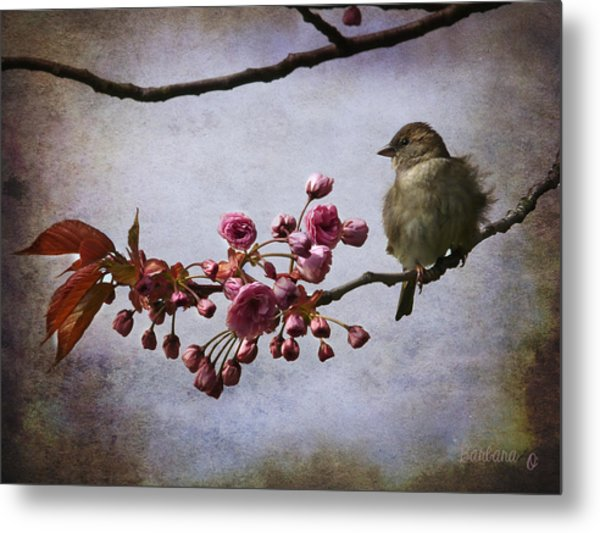 Fluffy Sparrow  Metal Print