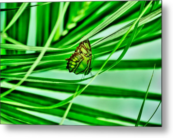 Flutter By Metal Print