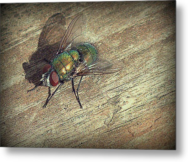 Fly Impressions Metal Print