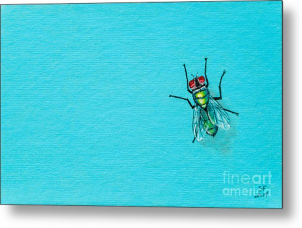 Fly On The Wall Metal Print
