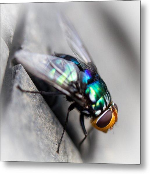Fly On Tyre Metal Print