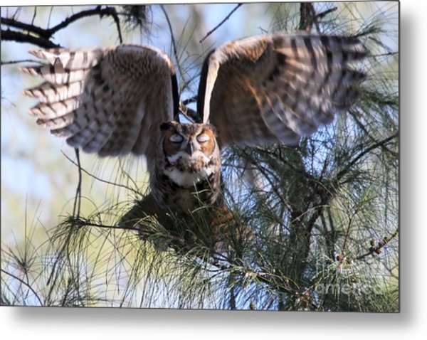 Flying Blind - Great Horned Owl Metal Print