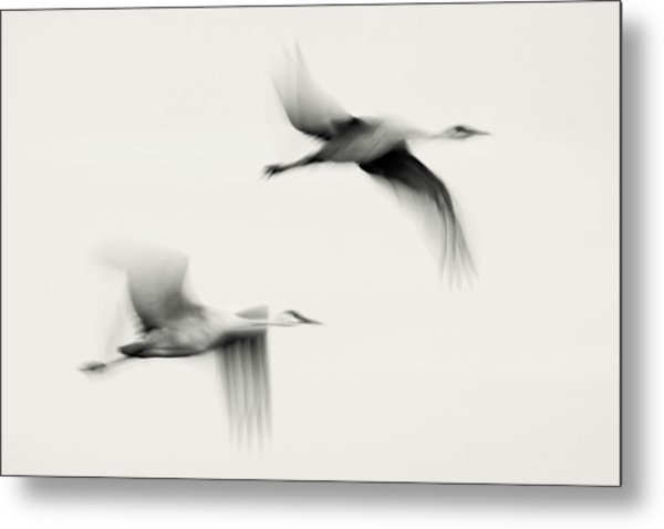 Flying Dreams Metal Print