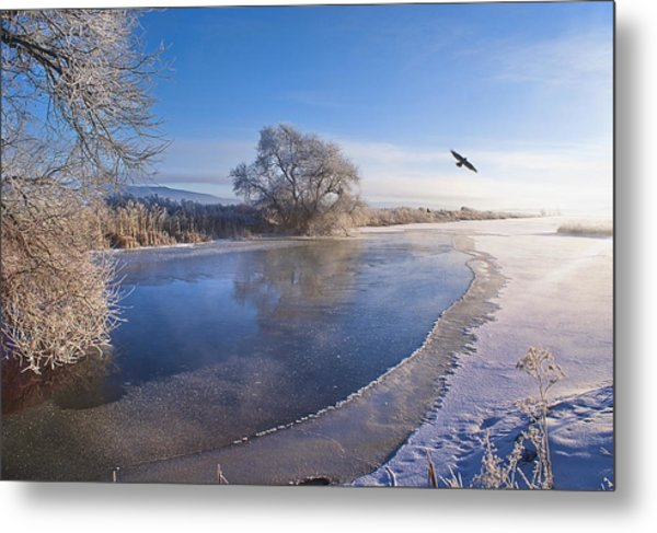 Flying Free On A Winter's Day Metal Print