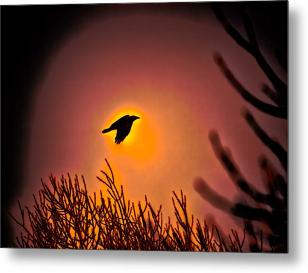 Flying - Leif Sohlman Metal Print