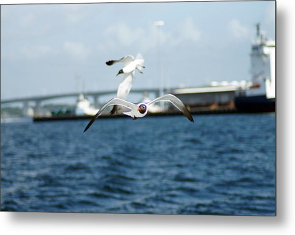 Flying Low Metal Print by Thomas Fouch