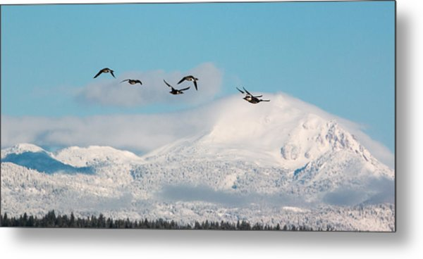 Flying North Metal Print