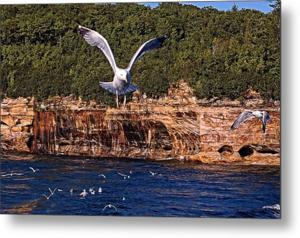 Flying Over The Rocks Metal Print by Cheryl Cencich