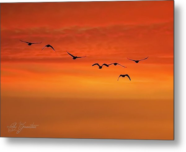 Flying South  Metal Print