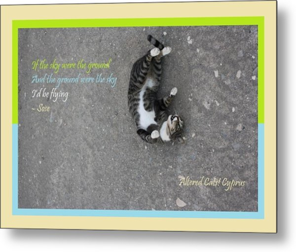 Flying With Sose From The Park Altered Cats Cyprus Metal Print