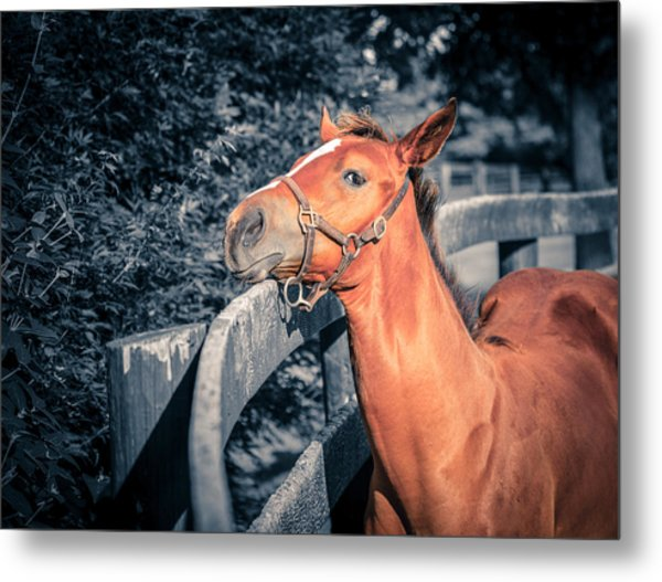 Foal By The Fence Metal Print