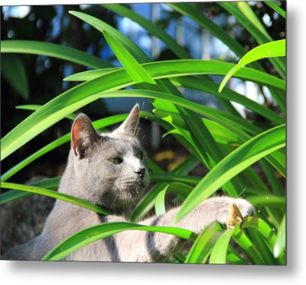 Focus Metal Print by Debbie Cundy