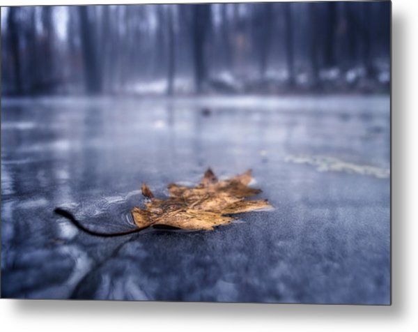 Fog Ice Leaf Metal Print