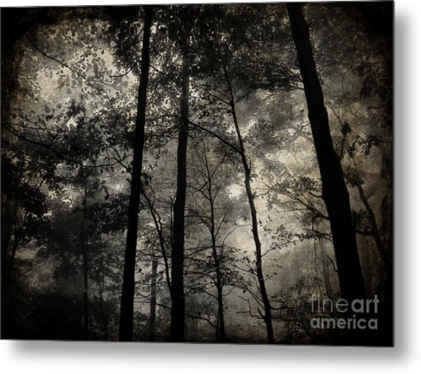 Fog In The Forest Metal Print by Lorraine Heath